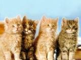ударные котята No1:начало! И первый БОСС ПОВЕРЖЕН!!!!!