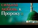 Удивительная любовь Султана к Пророку ﷺ