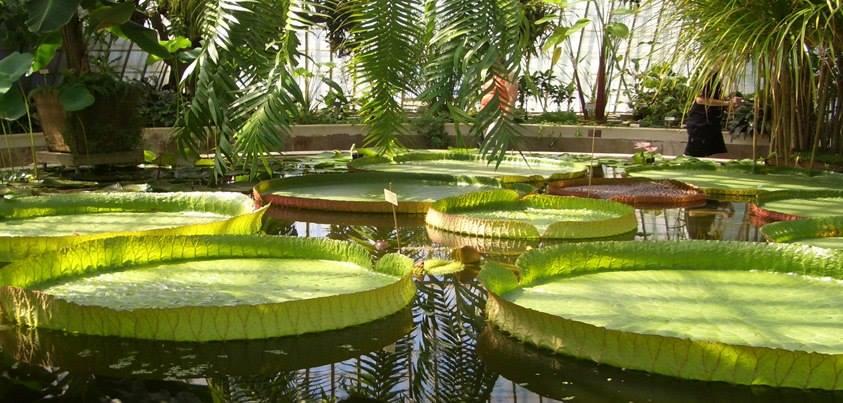 Бергианский ботанический сад. Стокгольм HRRRJghzAfc