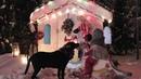 Маленькие волхвы ищут Рождество