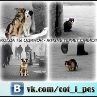 Кот и пес помощь бездомным животным