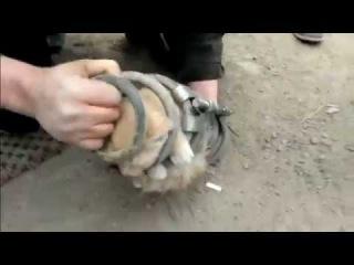 Установка кота в пружину автомобиля