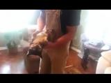 Хитрый пёс притворяется мертвым, когда посторонний берет его на руки