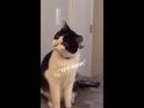не пугайте своих котов