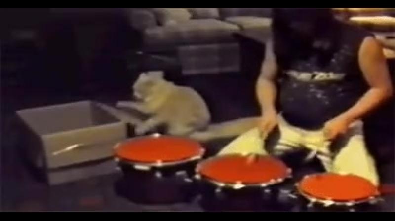 Эта кошка - адский барабанщик