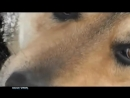 [v- Захаров (Рок Острова) На кольцевой (песня про верного пса).mp4