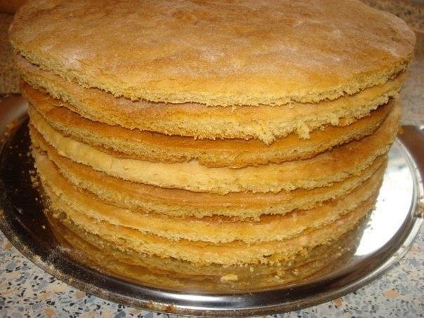 Какой торт можно приготовить из коржей