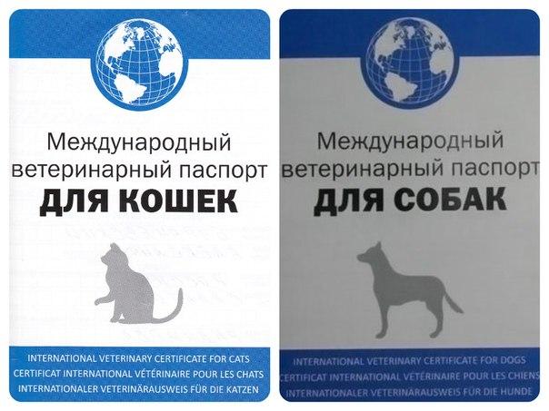 Ветеринарный паспорт своими руками