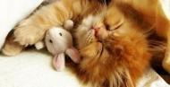 Спокойной ночи....