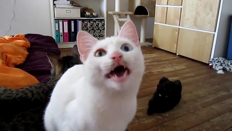 Инопланетный кот мяукает на неизвестном языке