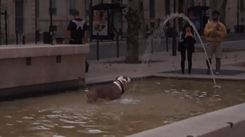 Беззаботно играющий пес в фонтане