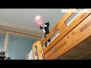 Animals Play Volleyball. Funny Volleyball Moments (HD) #2