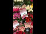 Все Розы по 85 рублей. Сегодня последний день