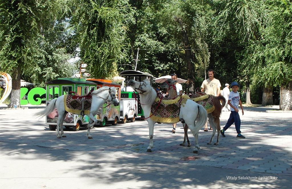 Лошади для фотографий в зоопарке Алматы