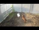 [Дом-3] Такса и кролик