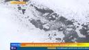 В Сети обсуждают снег с блохами выпавший в Сызрани