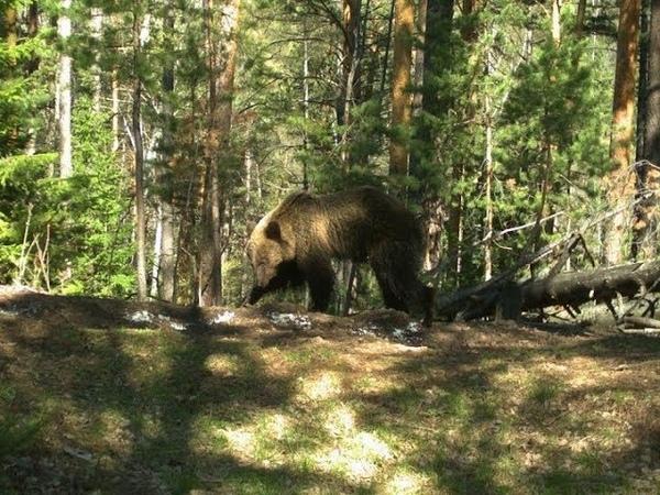 Заповедник «Столбы» закрыли для свободного посещения из-за медведей