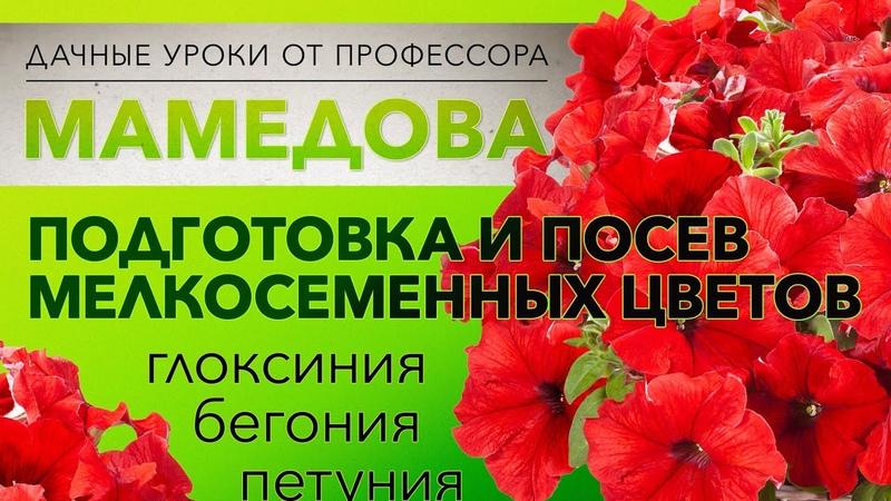 Подготовка и посев мелкосеменных цветов (бегония, глоксиния,петуния)