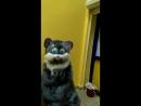 Кот зашёл за шаурмой в Dёner (Нижнекамск)