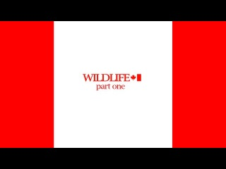 WILDLIFE part 1