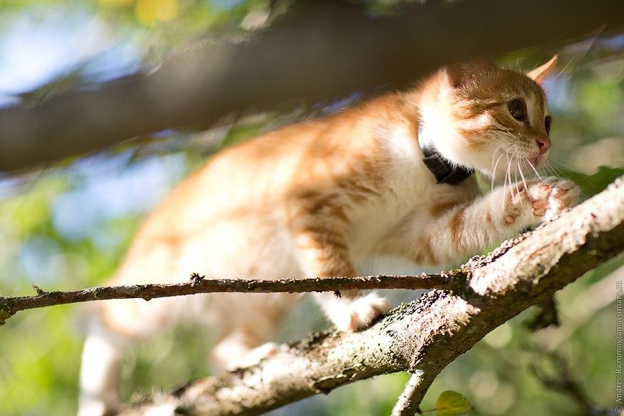 рыжий кот на дереве