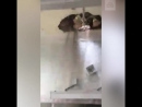 Потолок рухнул во время урока английского
