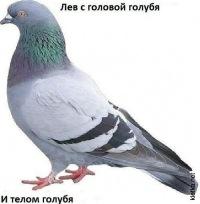 Роман Батов