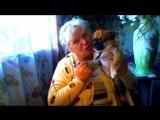 Чужая собака и мой кот