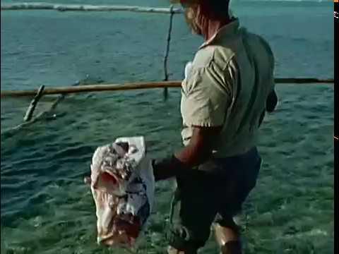 Жак-Ив Кусто - The Fish That Swallowed Jonah (1976) Подводная одиссея команды Кусто