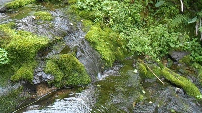 Кедр и ручей под перевалом им. группы Дятлова