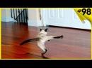 Подборка видео приколов с котами на 10 минут Смешные коты!