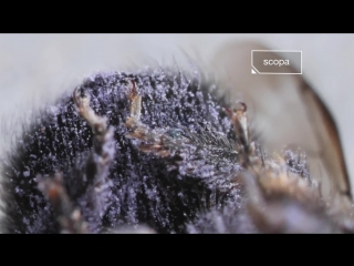 Watch This Bee Build Her Bee-jeweled Nest (Deep Look)
