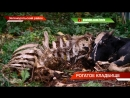 Рогатое кладбище незаконный скотомогильник в Зеленодольском районе ТНВ