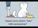 Скетч про кота