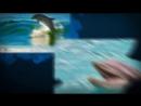 23 июля-Всемирный день китов и дельфинов.