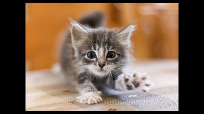 Детская песня Котенок. Песенка про котенка
