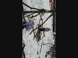 Бабсовет на лесоповале