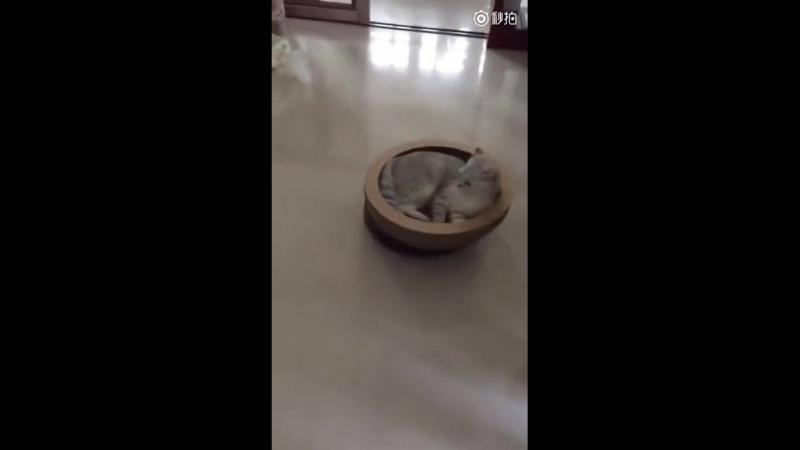 котя закатился