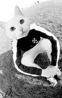 фото на аву в вк кот в найке