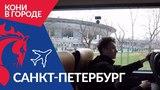 Кони в городе: Санкт-Петербург