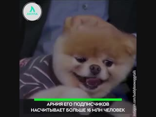 Умер популярный пёс | АКУЛА