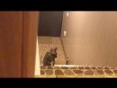 Кошка мяу мяу застрял на лестнице