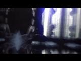 Casm vines Katherine Pierce x Elena Gilbert/ the vampire diaries tvd