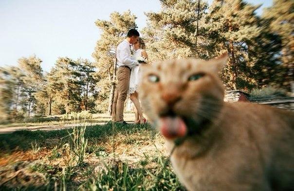Эти фотографии не были бы настолько крутыми, если бы не кошки, случайно попавшие в кадр.