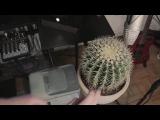 Cactus Meets Drum&ampBass
