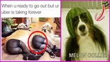 Funniest Dog Memes That 100 Make You Laugh All The Time