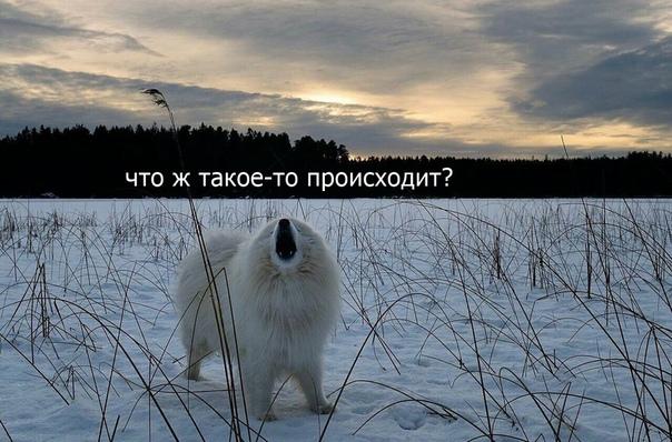 Фото №456273295 со страницы Натальи Радченко