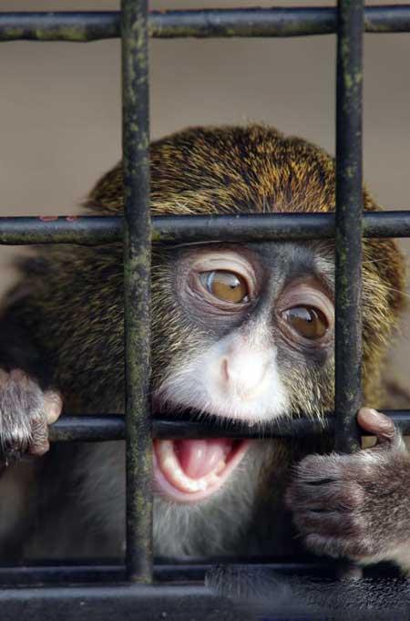 Была создана надежная вакцина против лихорадки Эбола у обезьян