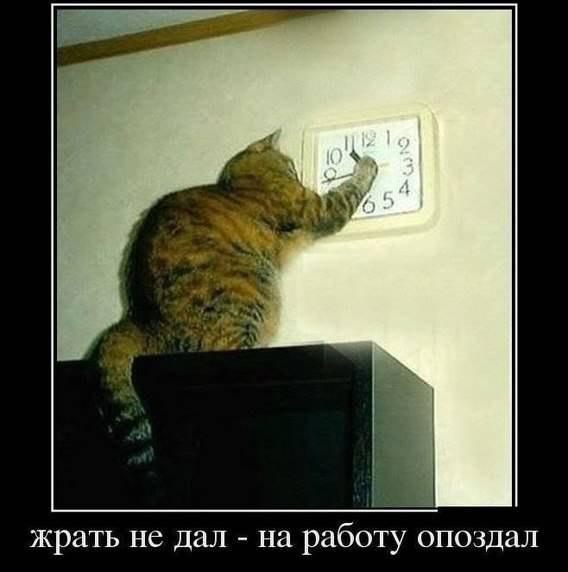 здесь мы шалим))) - Страница 4 ANFG_hdz2F0