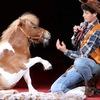 Цирковые номера для детских праздников